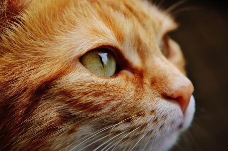 Cat Management Tabby Cat