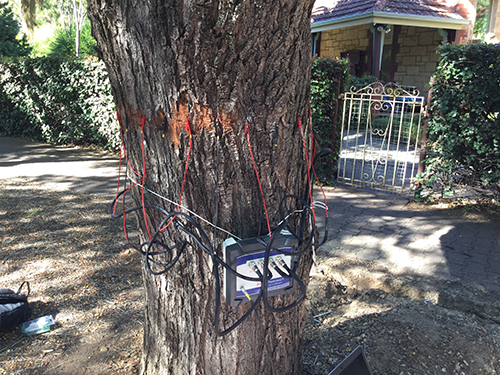 Measuring how much water our street trees use April 2019 ERT on tree