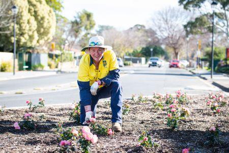 Rose planting Princes Road